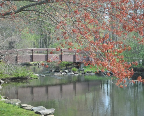 Armonk-Home Insurance-Garden