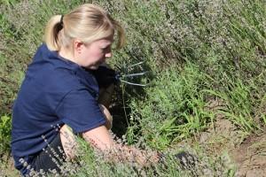 LF-Andrus Weeding